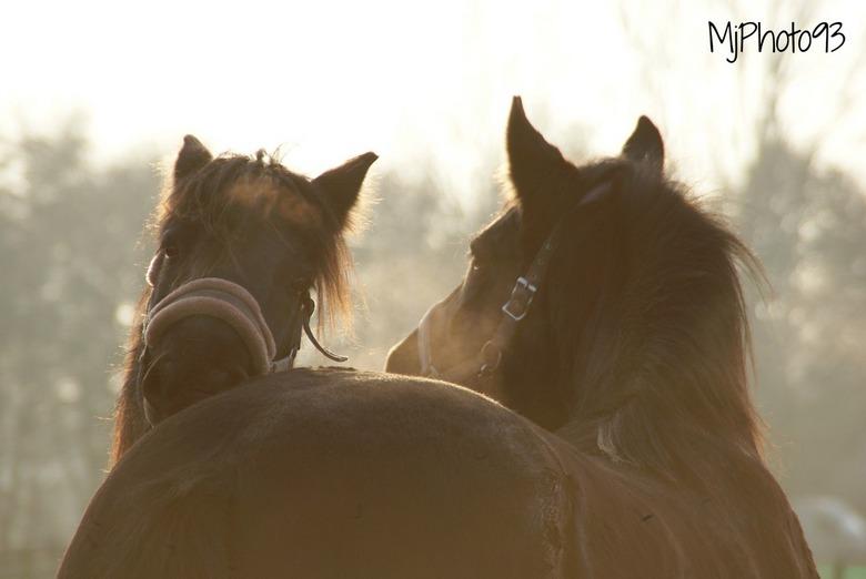 horses - wauw