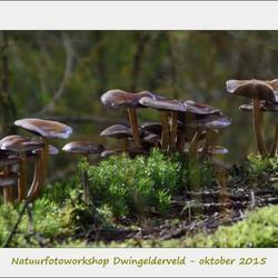 Paddenstoelen - Natuurfotoworkshop Dwingelderveld