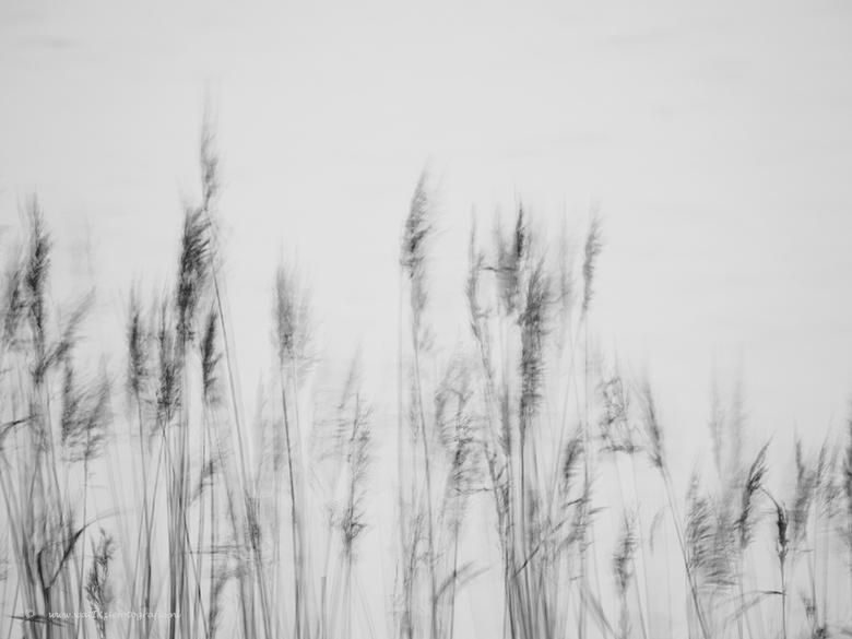 Wind aan het Wad