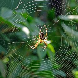Katholieke spin