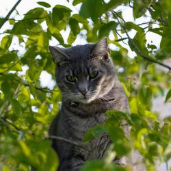 mac kat van de buren