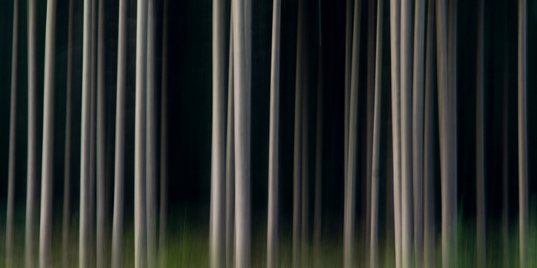 Mystiek bos - Deze foto is gemaakt in het bos in Weeze (D)