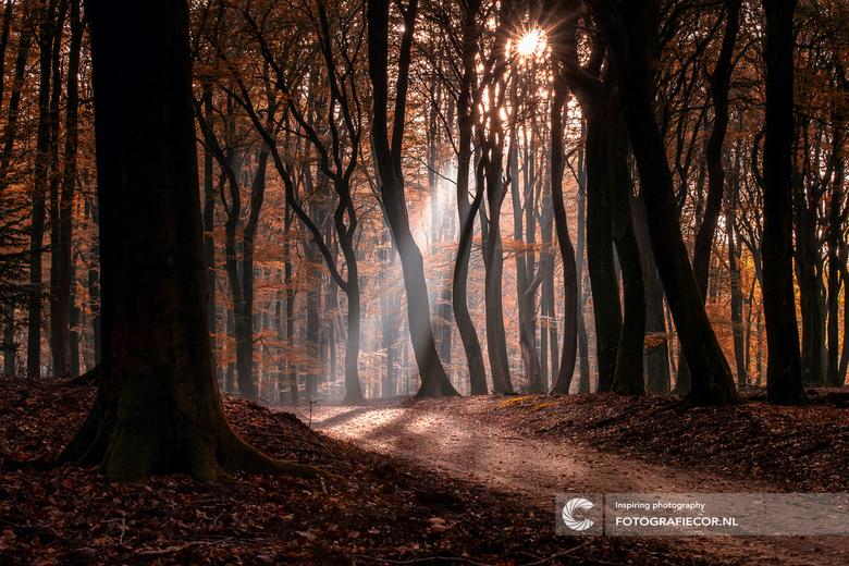 Een beetje magie in het bos - Het speulderbos zelf is al magisch tijdens een wandeling, in de herfst is het er meer dan prachtig, en als het mistig is