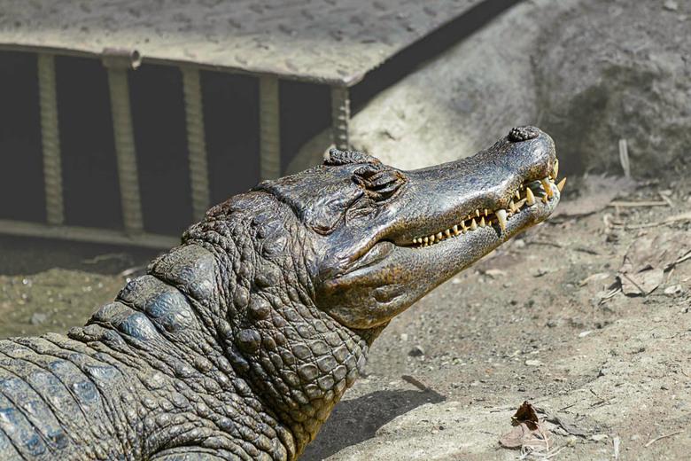 Zoo Cali-4 -