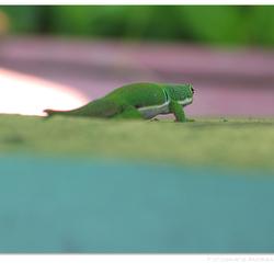 Het is groen en het.....