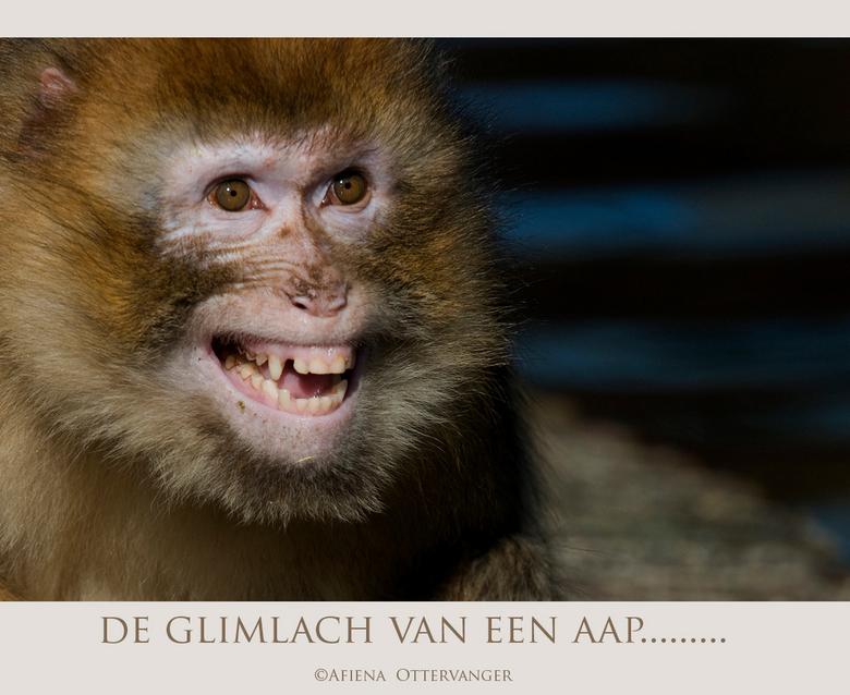 de glimlach van een aap... - Voor Sjoerdtje (Jora)<br /> met wie ik vandaag een hele gezellige dag heb gehad in Ouwehands dierenpark en waar we zoals