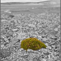 IJsland: Tere vegetatie