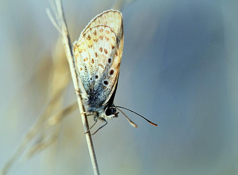 In balans !! - Hangend op een sprietje kwam ik deze tegen met het avondzonnetje op z&#039;n vleugels .<br /> <br /> Bedankt voor alle reakties !!!