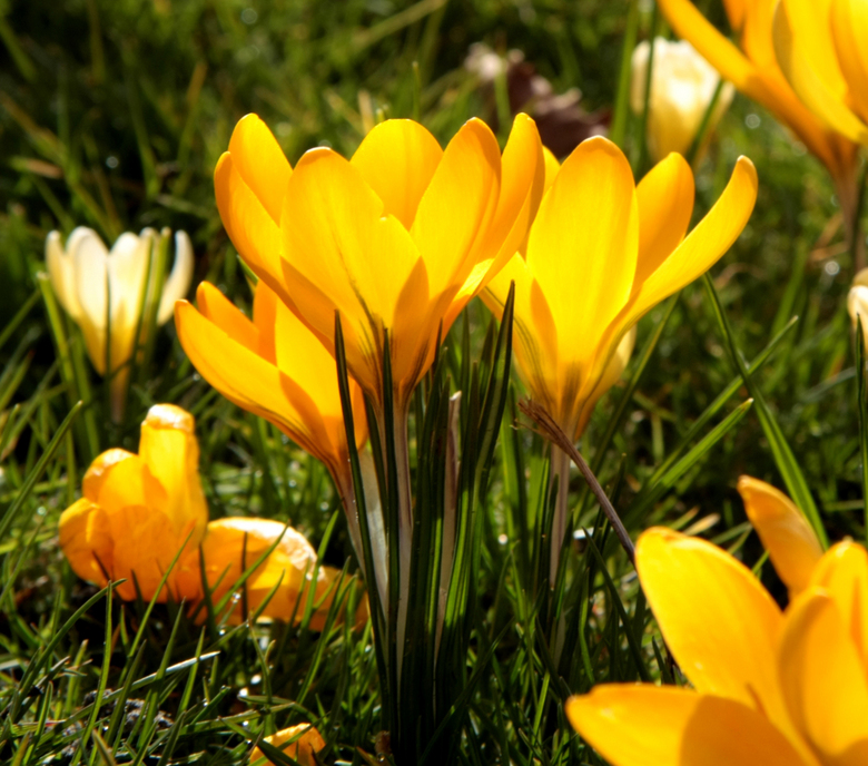 GEEL - De tekenen van het voorjaar, ik kan er geen genoeg van krijgen! Heerlijk die vrolijke kleuren en die bloemen. Zeker compleet met een heerlijk z