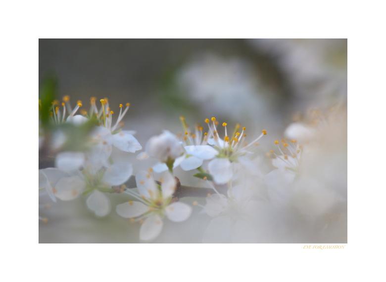 Vrolijk Pasen! - Ik wens iedereen hele fijne paasdagen, met veel zon, warmte en leuk gezelschap!
