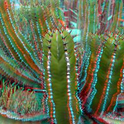 cactus Arboretum Trompenburg Rotterdam 3D
