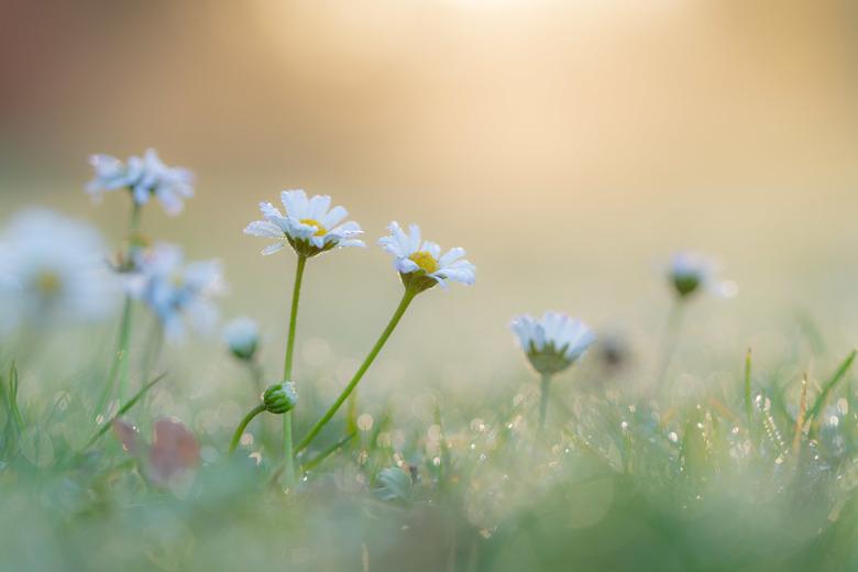 Heerlijke ochtend - Het mooie licht gevangen.