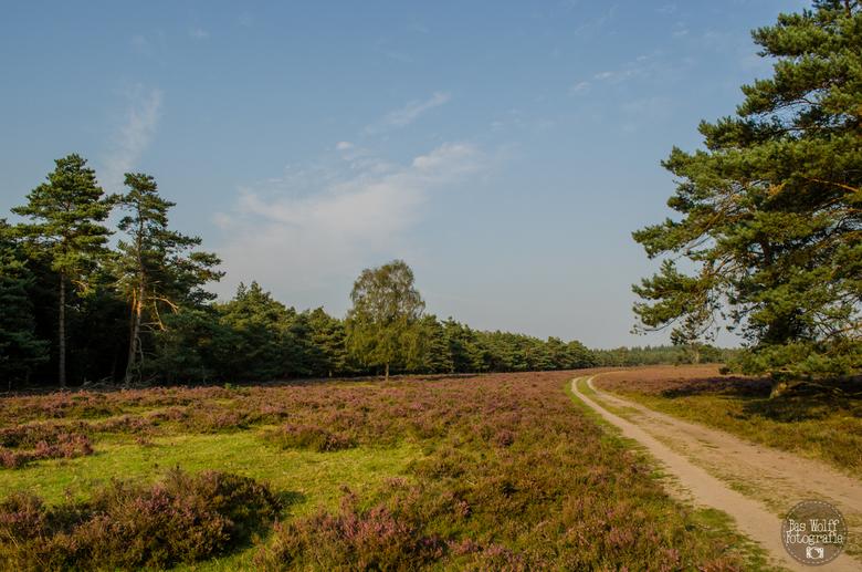 Wezepse Heide - De veluwe op zijn best!