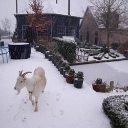 Weer of geen weer geit Pien wil wandelen