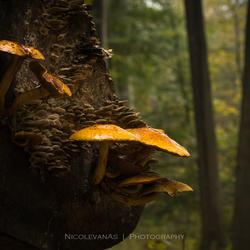 Autumn sfeer 1.