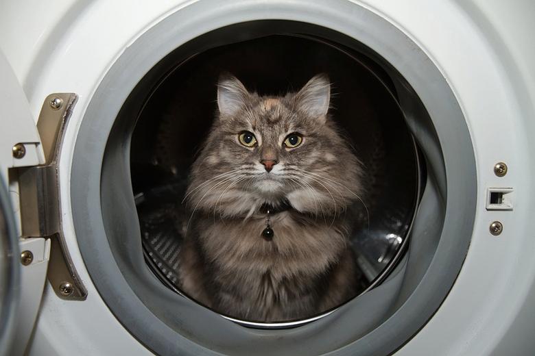 "Dry Clean Only - <a href=""http://roeselien.wordpress.com/2012/12/02/81-dry-clean-only/""> Zin &amp; Onzin over poezen in de wasmachine</a>."
