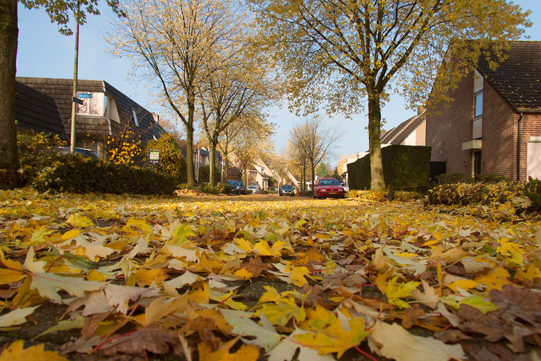 straat in herfsttooi - Het gaat hard met het vallen van de blaadjes, dit is een opname van gisteren bij mij in de straat.