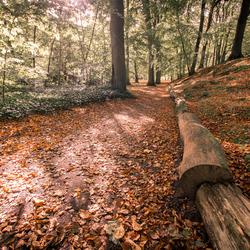 Clingendaelse park in de herfst