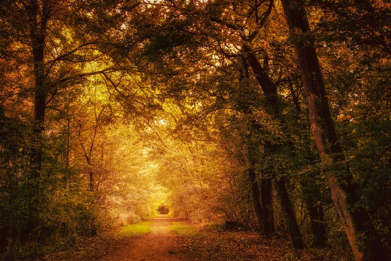 Het gouden bos - En het blijft maar zonnig. Wat geeft dat heerlijke kleuren in het bos.<br /> <br /> <br /> Bedankt voor jullie mooie reacties.