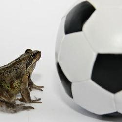 Voetbal pad