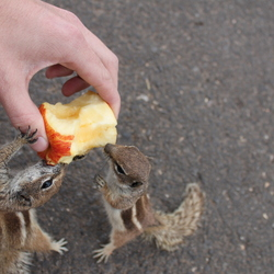 sharing an apple