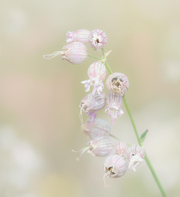 Veld bloem -