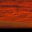 Zwanenvlucht onder rode hemel