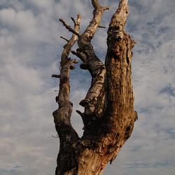 Dode boom in de lucht