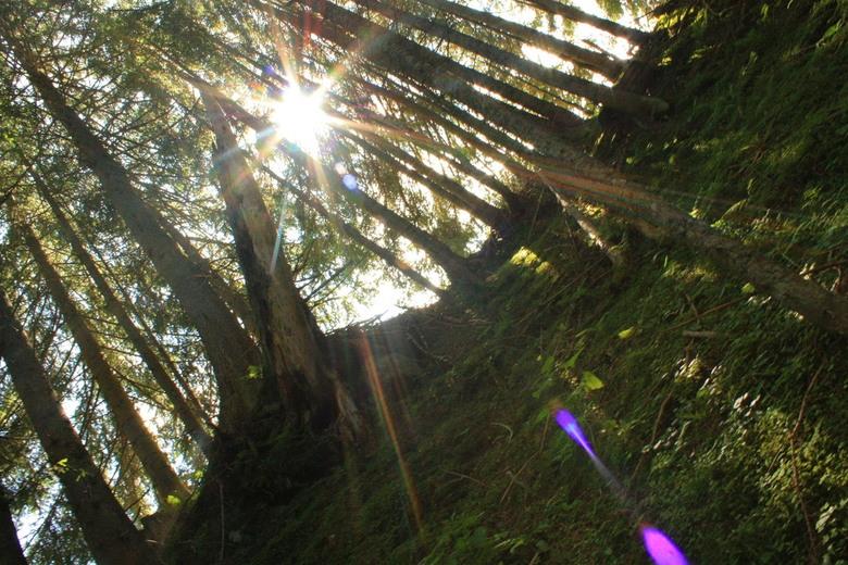 zon door bomen - hoe mooi een uv filter op een gewone lens wel niet kan zijn. bij deze foto is gewonde amateursapparatuur gebruikt, en de foto is bijn
