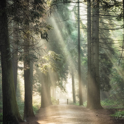 through the light path