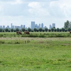 qzh RotterdamVanAfstand qzh Pijnacker (PijnackerNootdorp) Ackerdijksepad 2019d0808t1215
