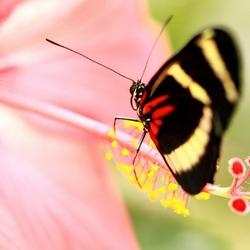 vlinder2 (800x533)