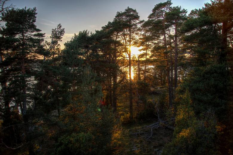 Through the trees -