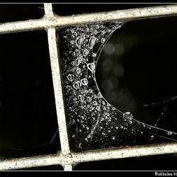 Druppels in een web