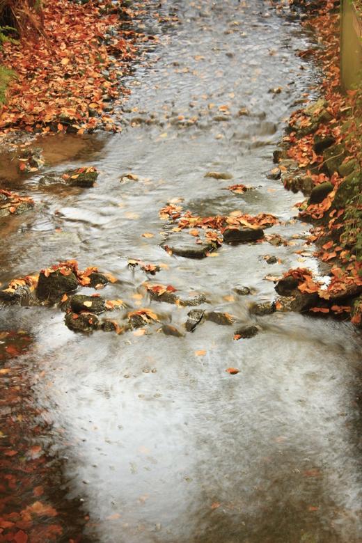 flowing stream - deze foto heb ik gemaakt in het staverden bos