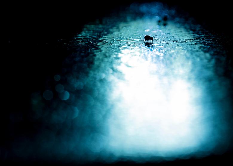 Springstaartje2 - Het kleine springstaartje met tegenlicht lijkt net een scene uit een horror film.
