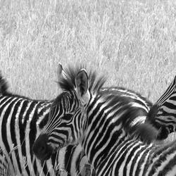 Streepjescodes in Tanzania