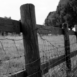 Forgotten Fence