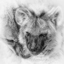 Hyena jong met moeder
