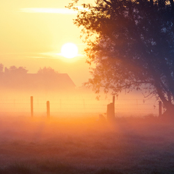 morningmist