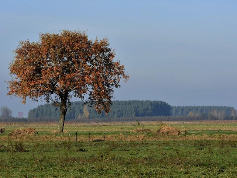 Beginnende herfst -