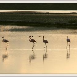Flamingo's in het wild @ Curacao