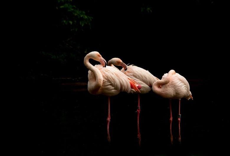 poetsen - als mooie vogel moet je wel zorgen dat het verenpakje ook mooi blijft ..ergo even een flinke poetsbeurt en dat doe je dan met z'n drieë
