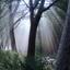 Mist filter