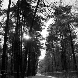 Bosweg in de sneeuw