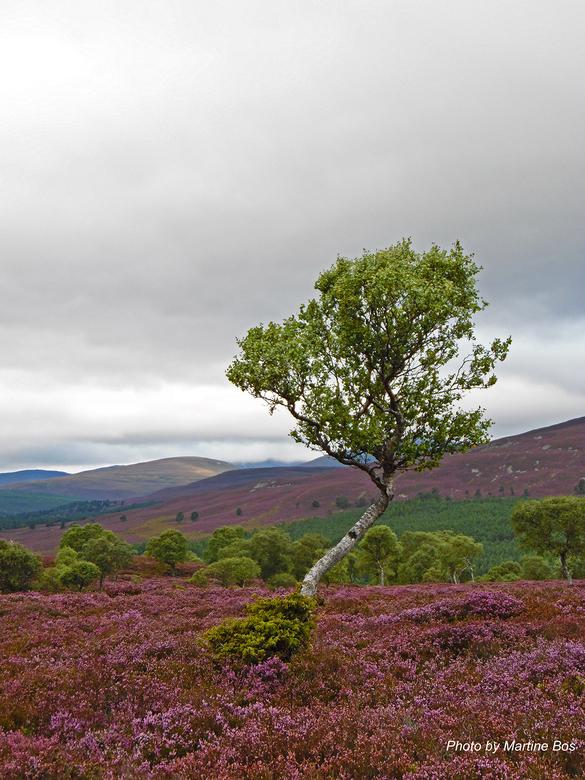 Scotland Tree - Tijd niks geplaatst, dacht maar eens een plaat te plaatsen van onze reis naar Schotland