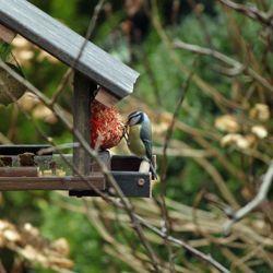 Eerste bezoeker vogelvoederplaats