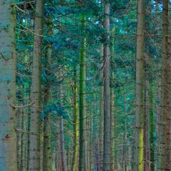 Door de bomen...