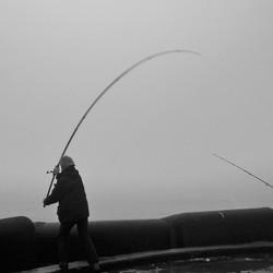Visser op pier 2