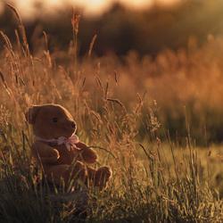 Teddybeer in het gouden zonlicht